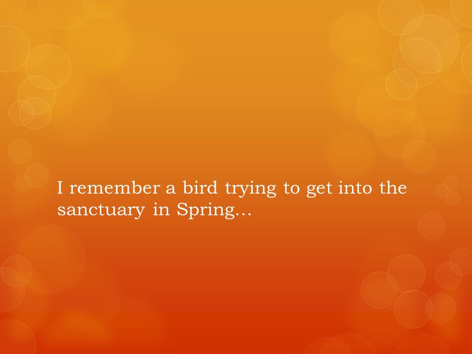I remember a bird trying to get into the sanctuary in Spring…