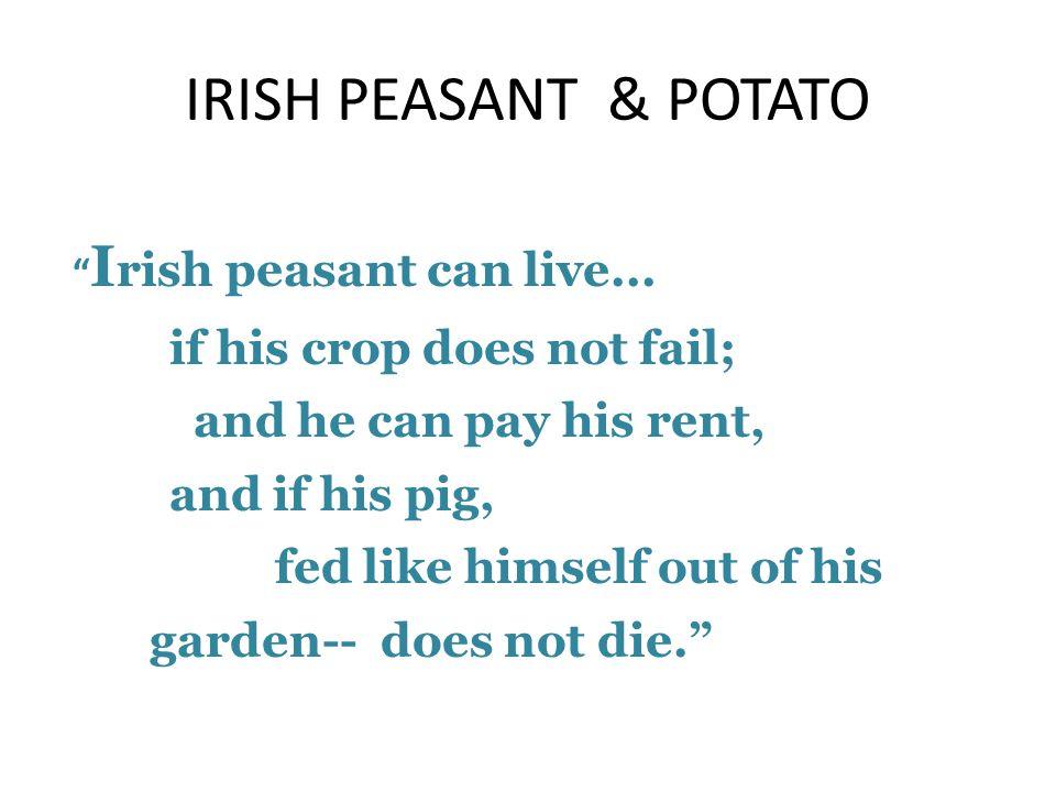 IRISH PEASANT & POTATO I rish peasant can live...