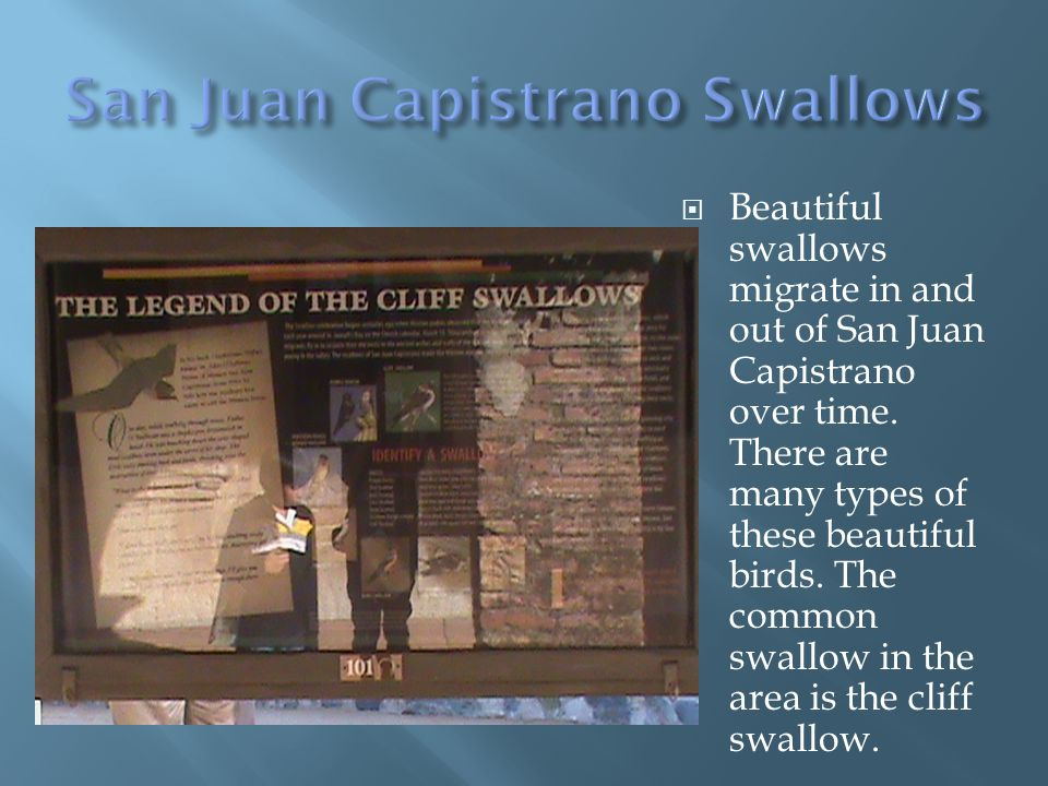 Beautiful swallows migrate in and out of San Juan Capistrano over time.