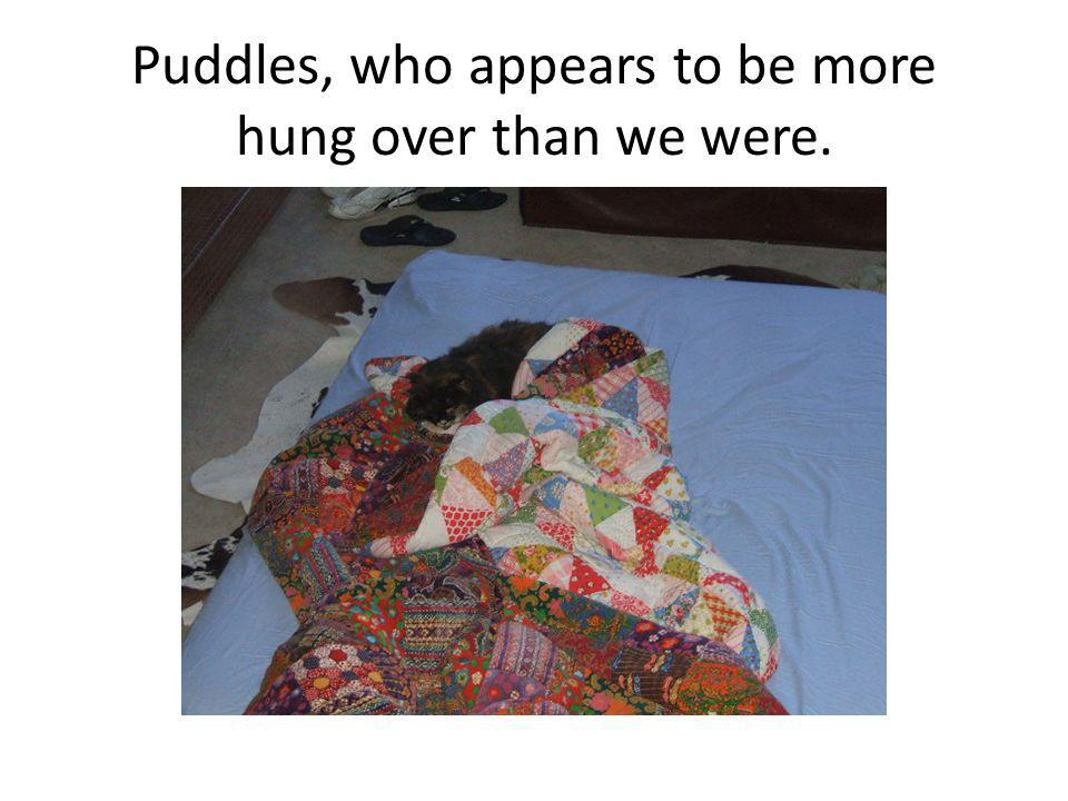 Puddles, who appears to be more hung over than we were.