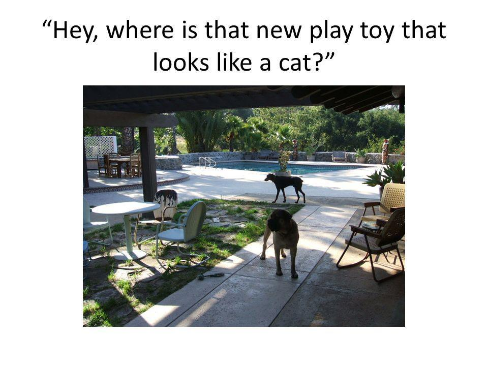 Hey, where is that new play toy that looks like a cat?