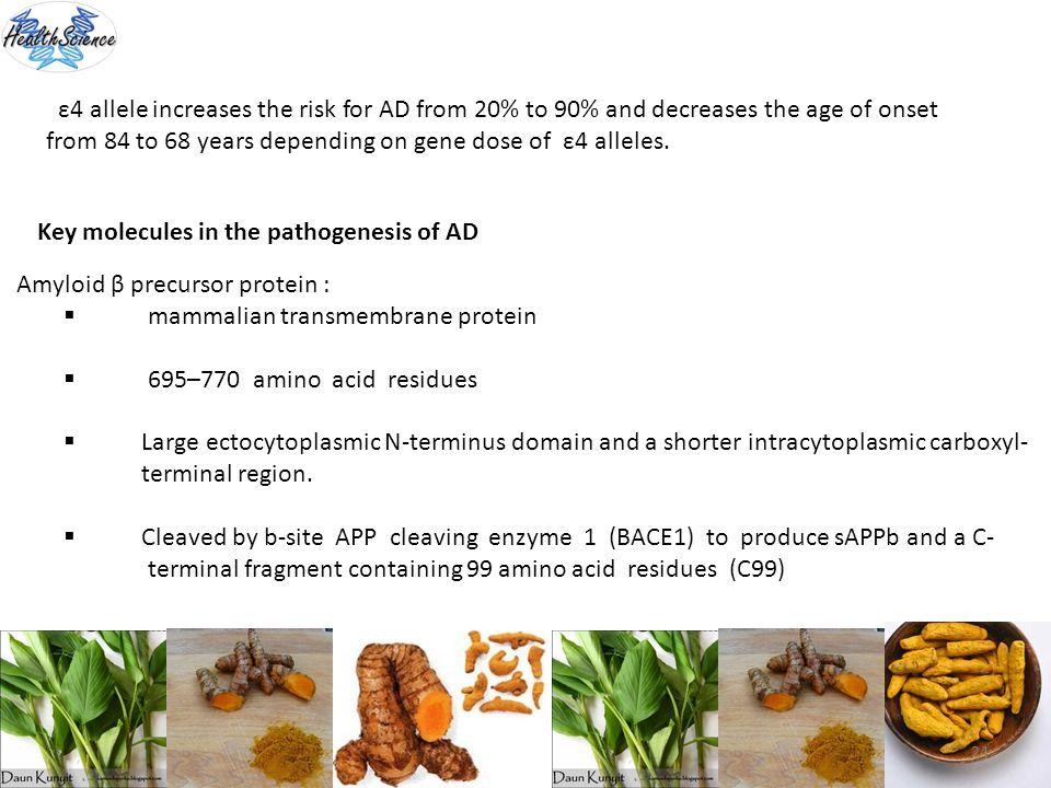 24 ε4 allele increases the risk for AD from 20% to 90% and decreases the age of onset from 84 to 68 years depending on gene dose of ε4 alleles. Key mo
