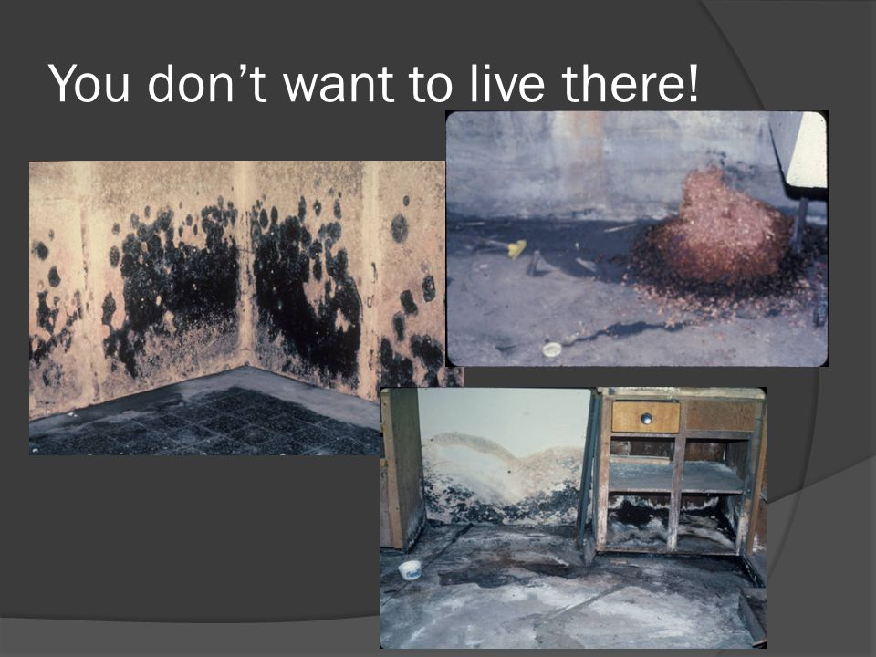 You dont want to live there!