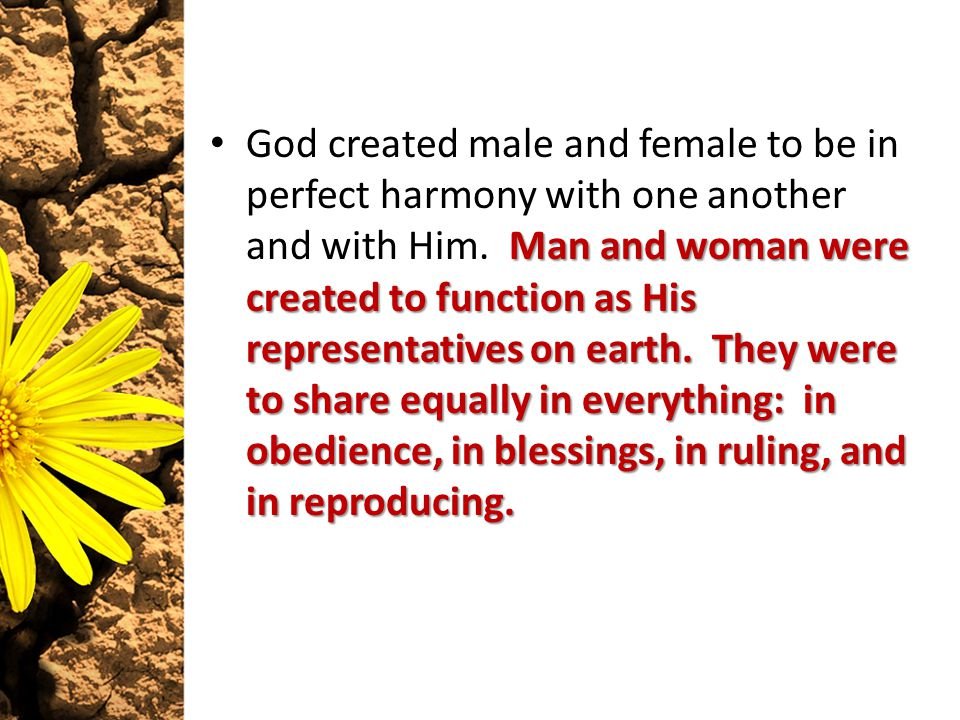 Man and woman were created to function as His representatives on earth. They were to share equally in everything: in obedience, in blessings, in rulin