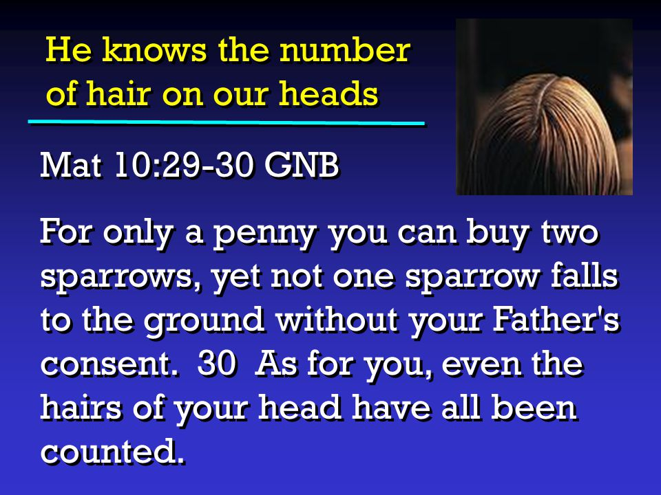 He knows the number of hair on our heads Mat 10:29-30 GNB For only a penny you can buy two sparrows, yet not one sparrow falls to the ground without y
