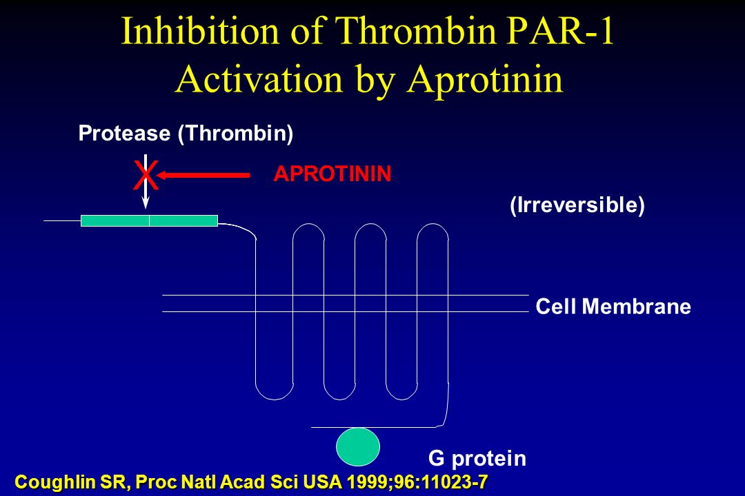 Inhibition of Thrombin PAR-1 Activation by Aprotinin Cell Membrane G protein Protease (Thrombin) (Irreversible) Coughlin SR, Proc Natl Acad Sci USA 19