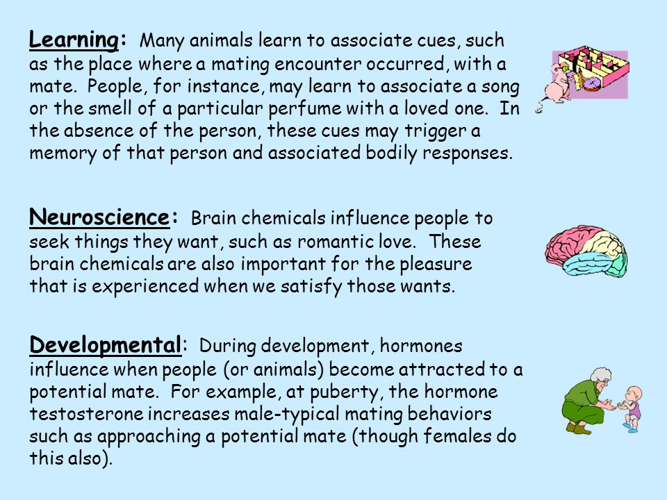 Learning: Many animals learn to associate cues, such as the place where a mating encounter occurred, with a mate.