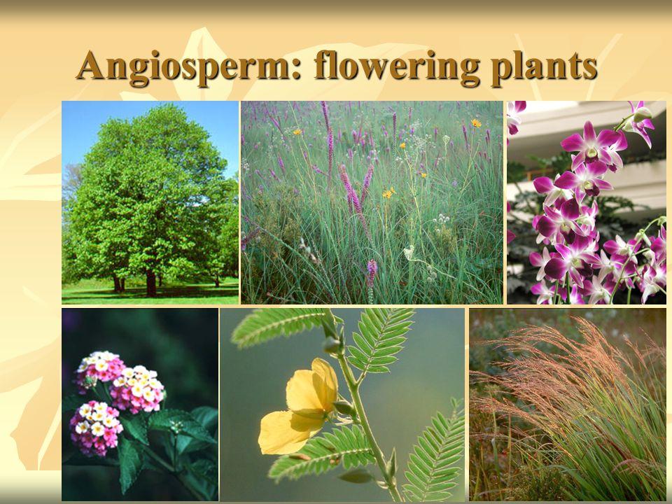 Angiosperm: flowering plants