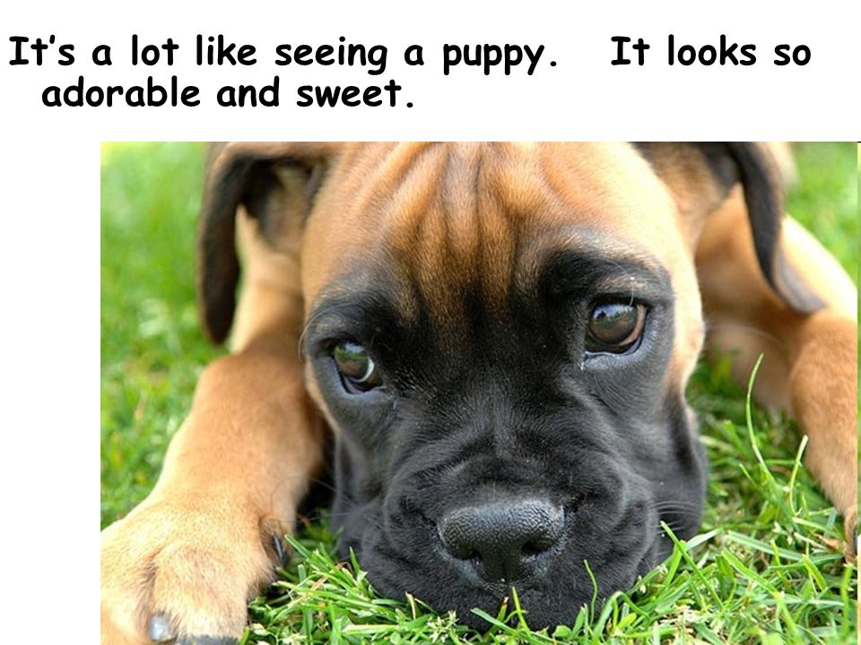 Copyright © 2007 by Marline E. Pearson. All Rights Reserved. Its a lot like seeing a puppy. It looks so adorable and sweet.