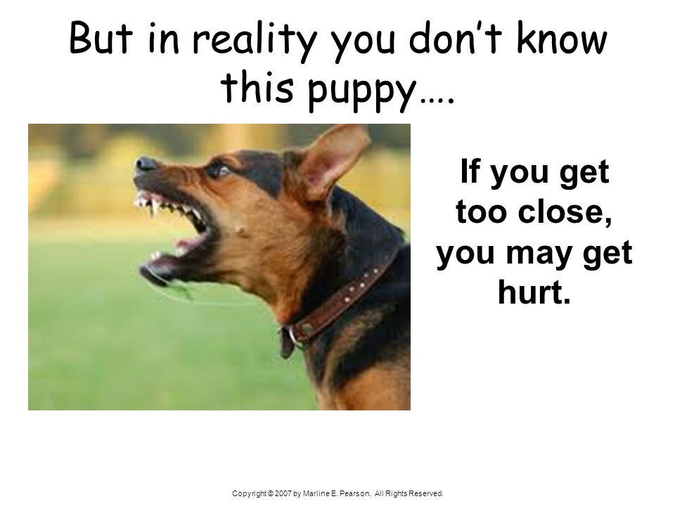 Copyright © 2007 by Marline E. Pearson. All Rights Reserved. But in reality you dont know this puppy…. If you get too close, you may get hurt.