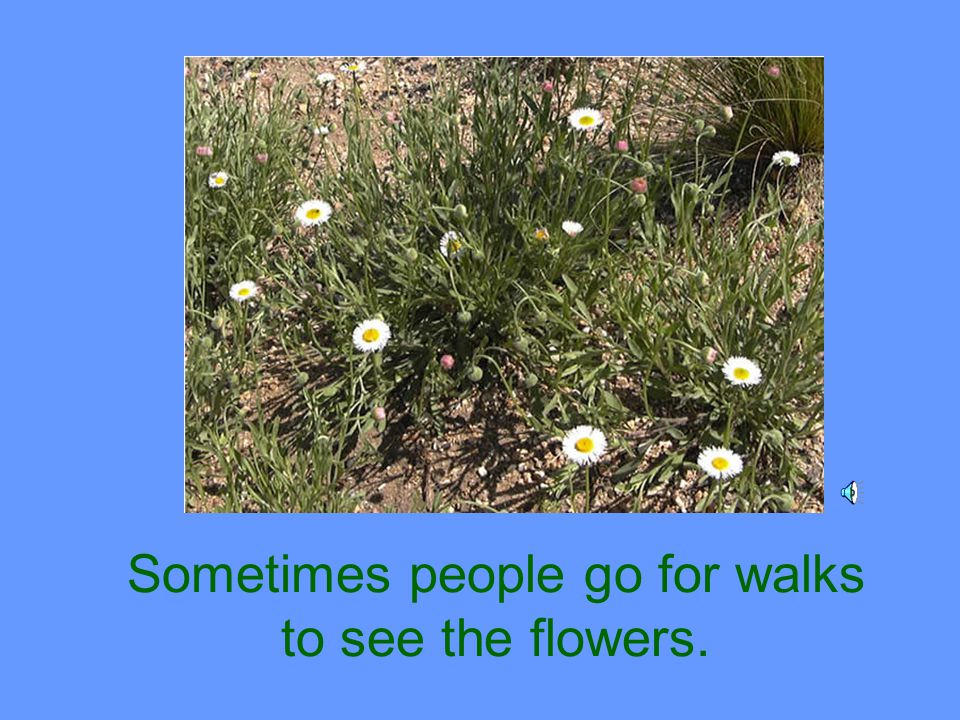 Sometimes people go for walks to see the flowers.