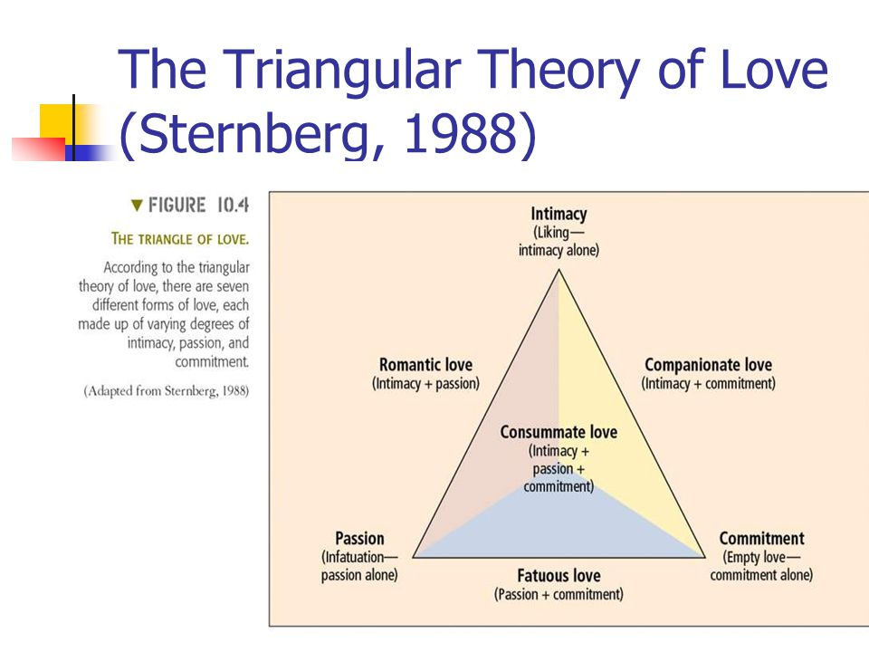 The Triangular Theory of Love (Sternberg, 1988) Passion Commitment Intimacy