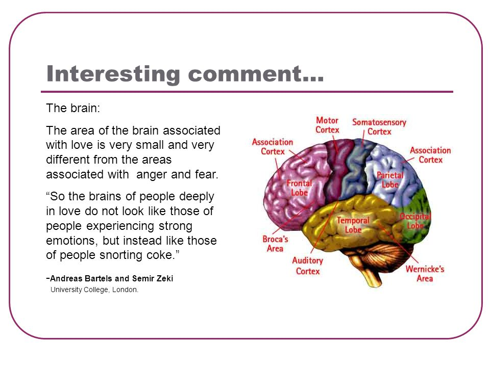 Interesting comment… The brain: The area of the brain associated with love is very small and very different from the areas associated with anger and fear.