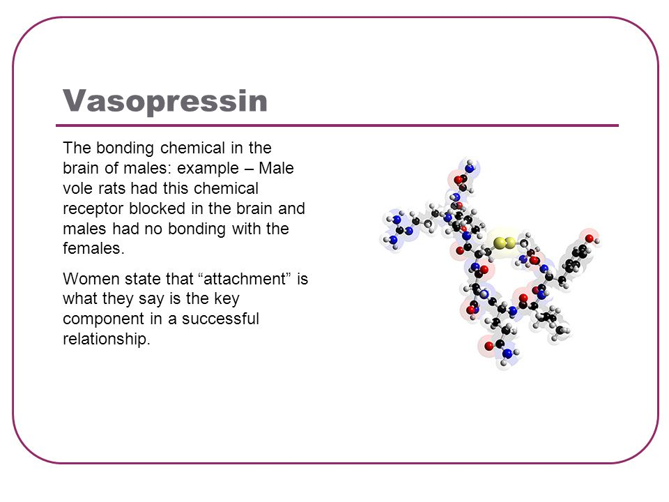 Vasopressin The bonding chemical in the brain of males: example – Male vole rats had this chemical receptor blocked in the brain and males had no bonding with the females.