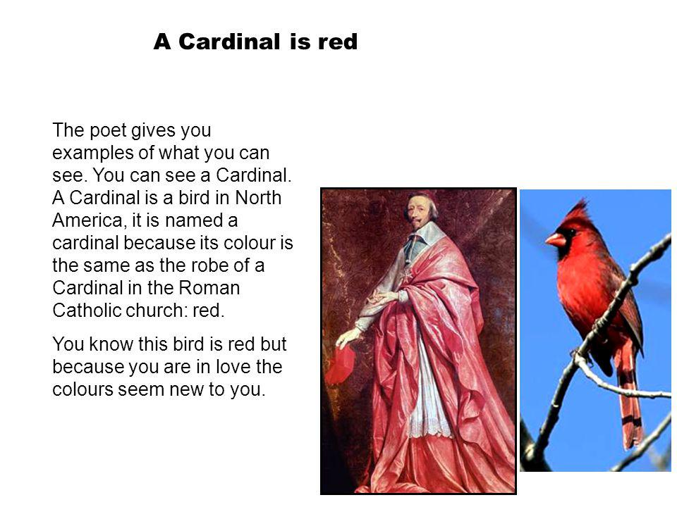 A Cardinal is red The poet gives you examples of what you can see. You can see a Cardinal. A Cardinal is a bird in North America, it is named a cardin