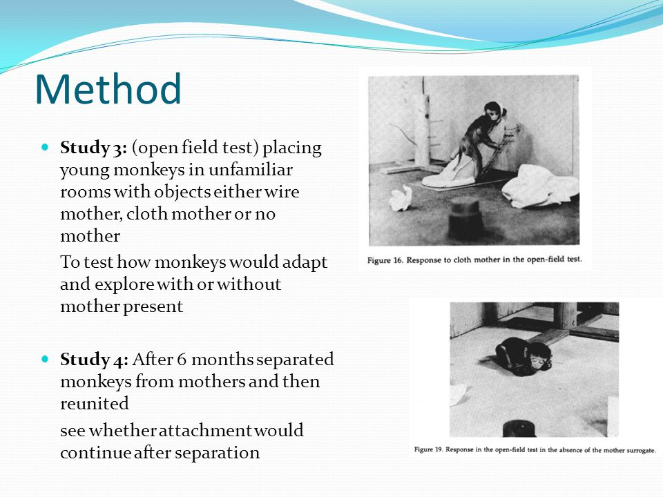 Method Study 3: (open field test) placing young monkeys in unfamiliar rooms with objects either wire mother, cloth mother or no mother To test how monkeys would adapt and explore with or without mother present Study 4: After 6 months separated monkeys from mothers and then reunited see whether attachment would continue after separation