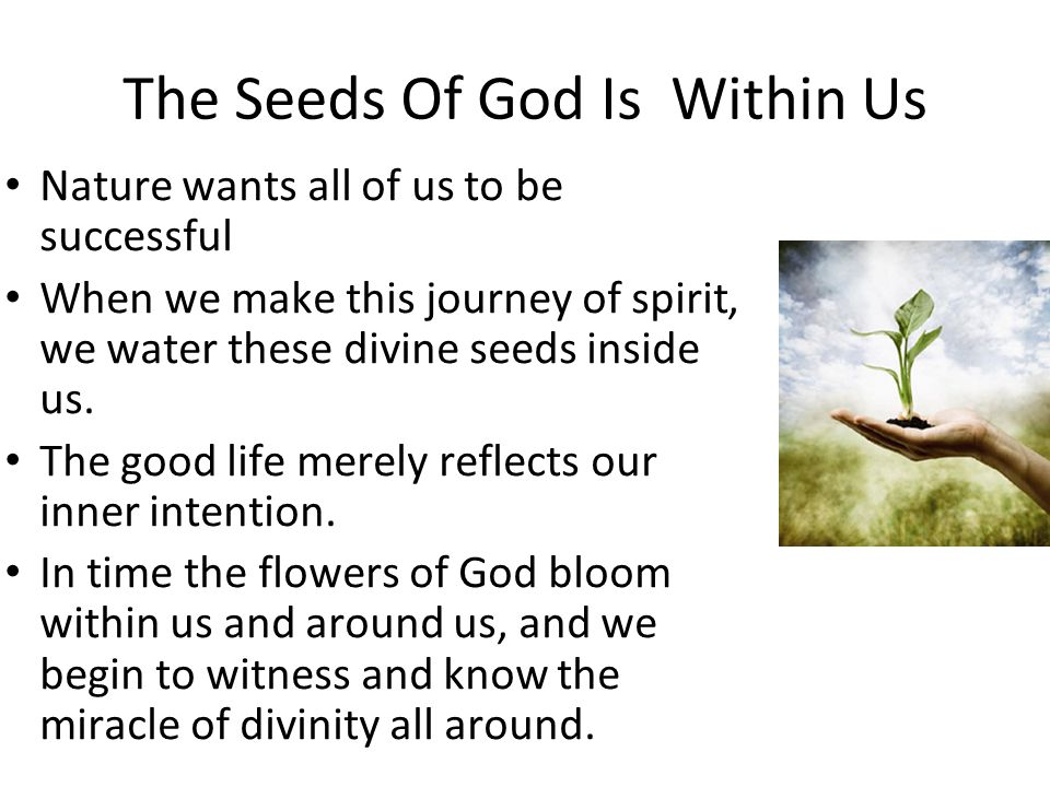 The Seeds Of God Is Within Us Nature wants all of us to be successful When we make this journey of spirit, we water these divine seeds inside us. The