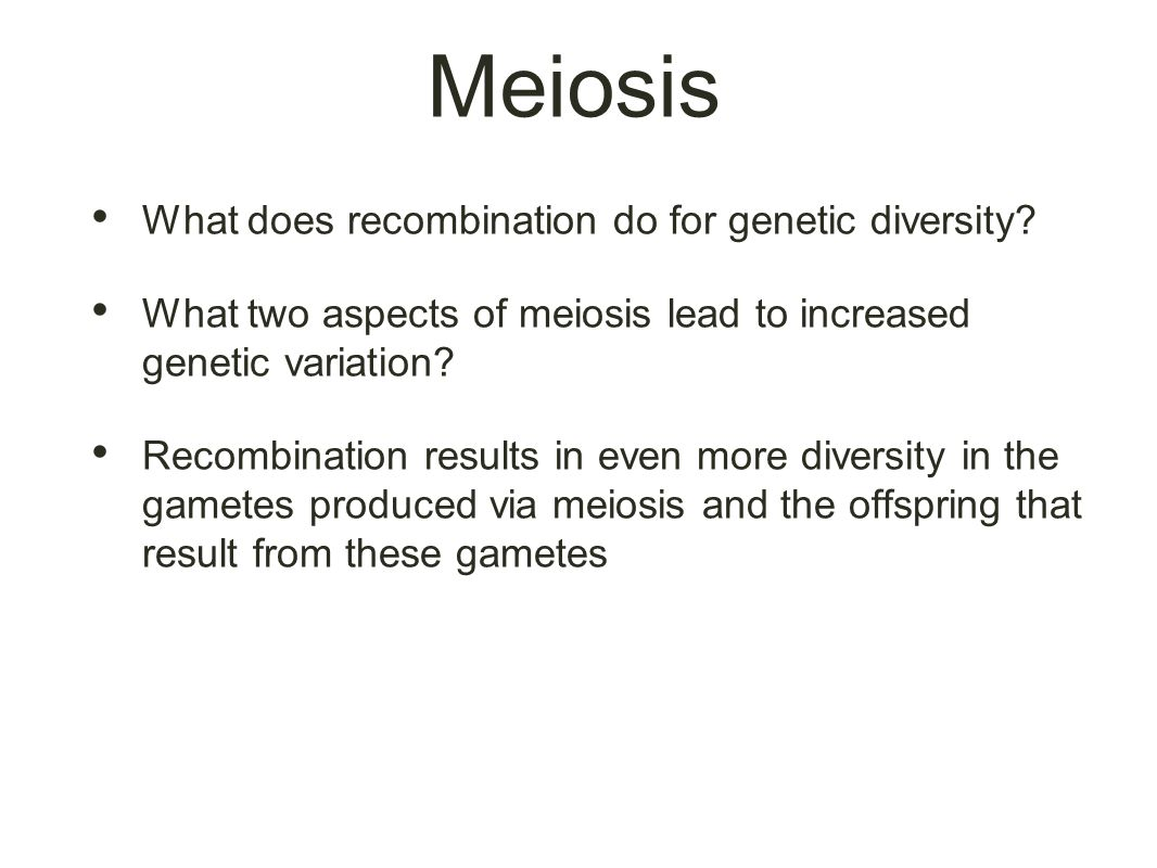 Meiosis What does recombination do for genetic diversity.