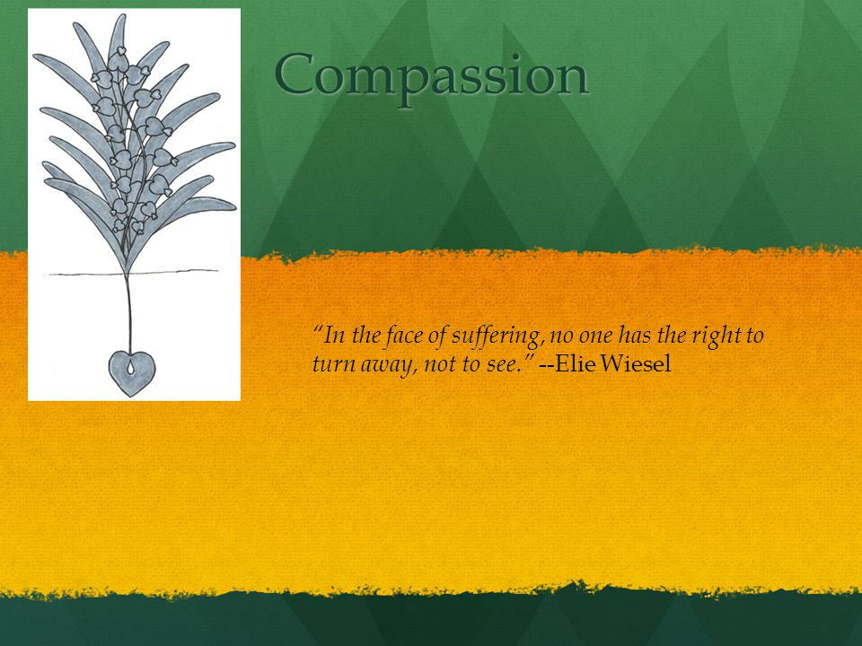 Compassion In the face of suffering, no one has the right to turn away, not to see. --Elie Wiesel