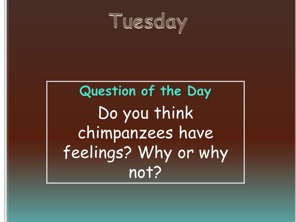 Question of the Day Do you think chimpanzees have feelings? Why or why not?