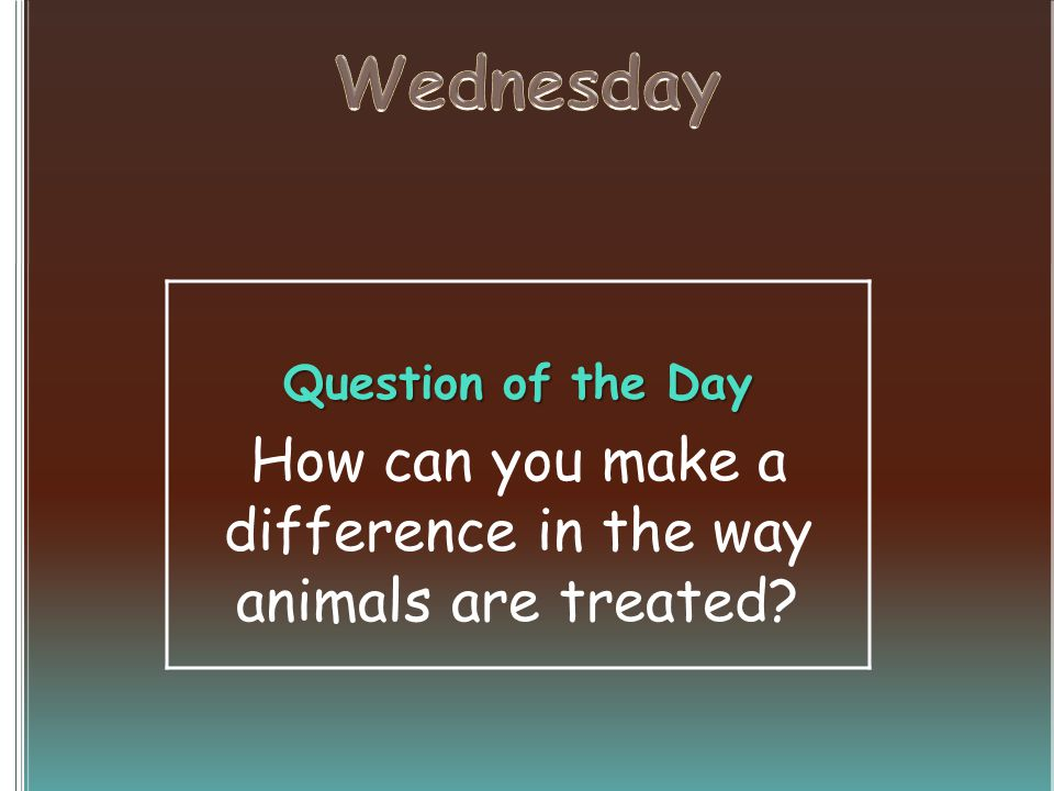 Question of the Day How can you make a difference in the way animals are treated?