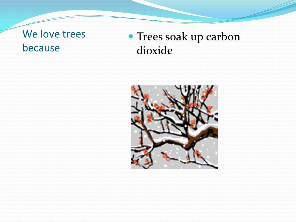 We love trees because Trees soak up carbon dioxide