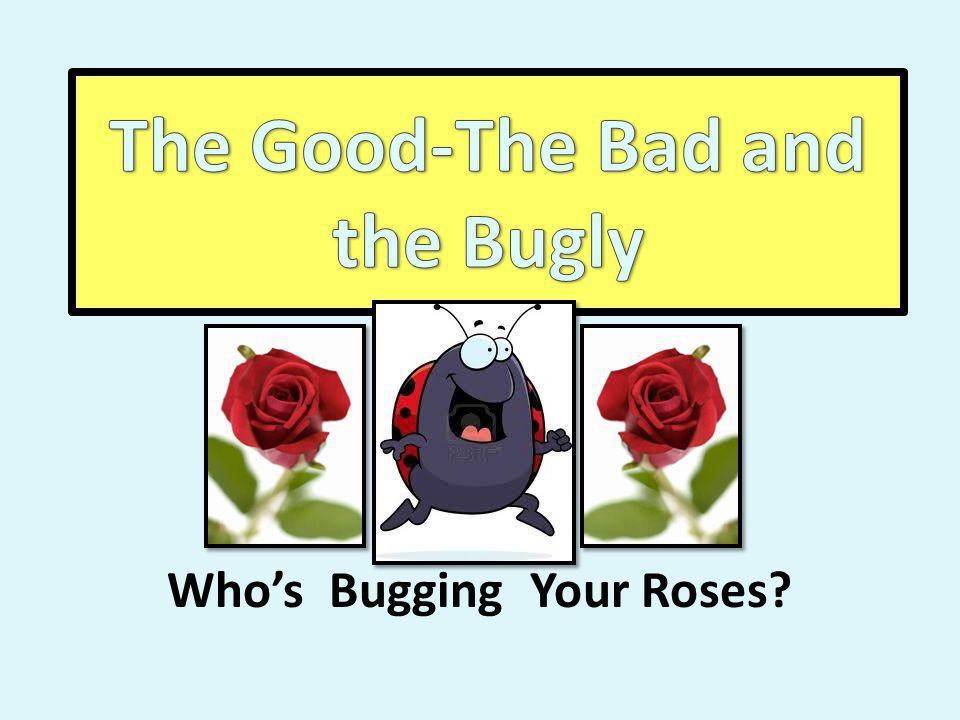 Whos Bugging Your Roses?