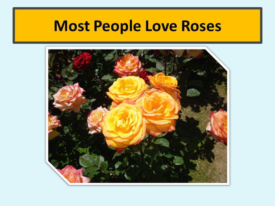 Most People Love Roses