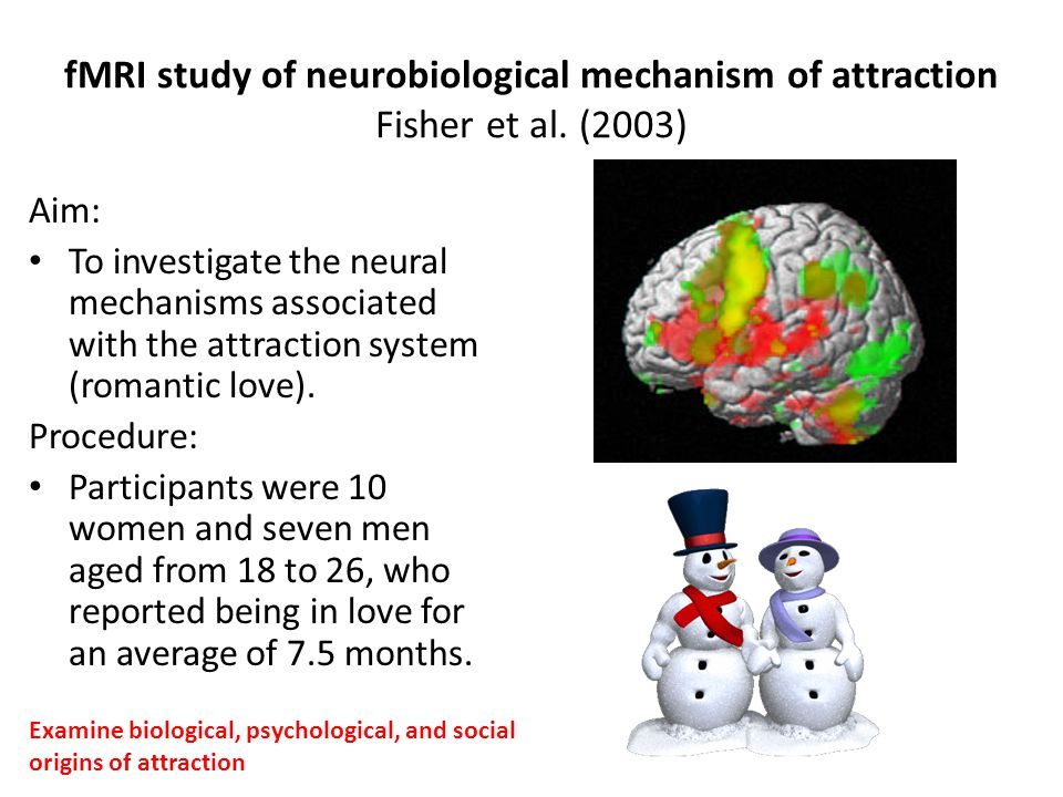 fMRI study of neurobiological mechanism of attraction Fisher et al. (2003) Aim: To investigate the neural mechanisms associated with the attraction sy