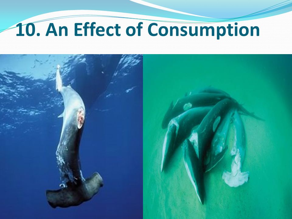 10. An Effect of Consumption