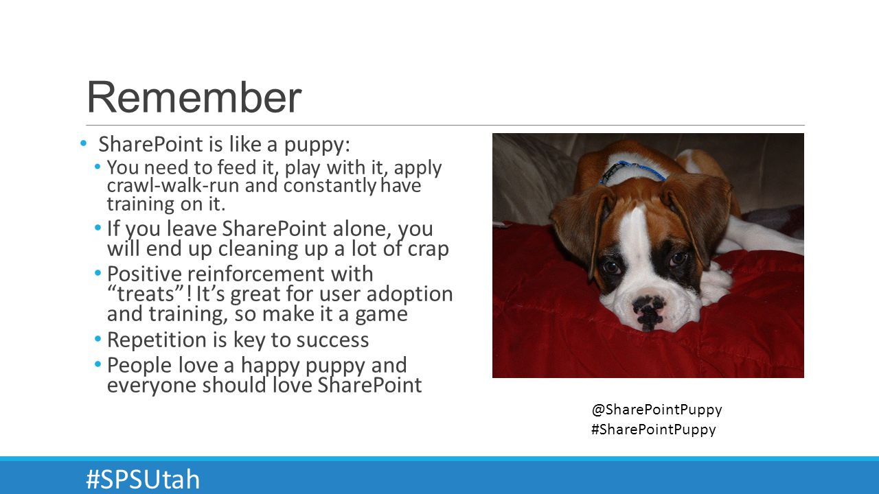 Remember SharePoint is like a puppy: You need to feed it, play with it, apply crawl-walk-run and constantly have training on it.