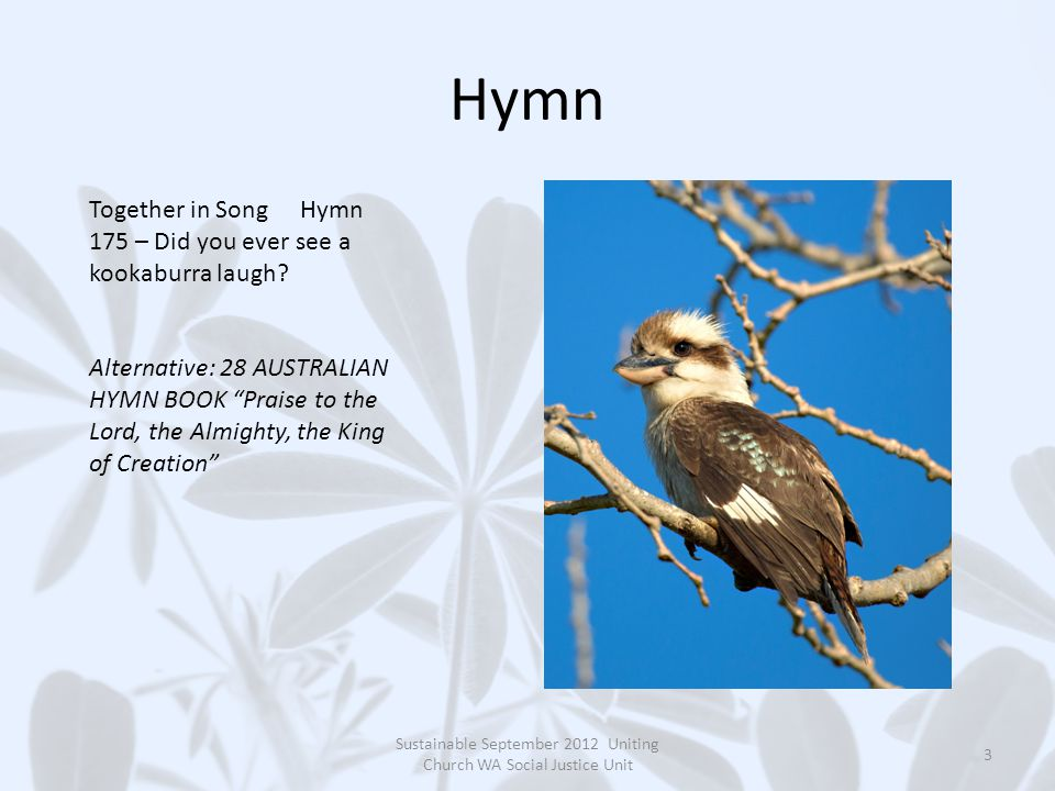Hymn Sustainable September 2012 Uniting Church WA Social Justice Unit 3 Together in SongHymn 175 – Did you ever see a kookaburra laugh.
