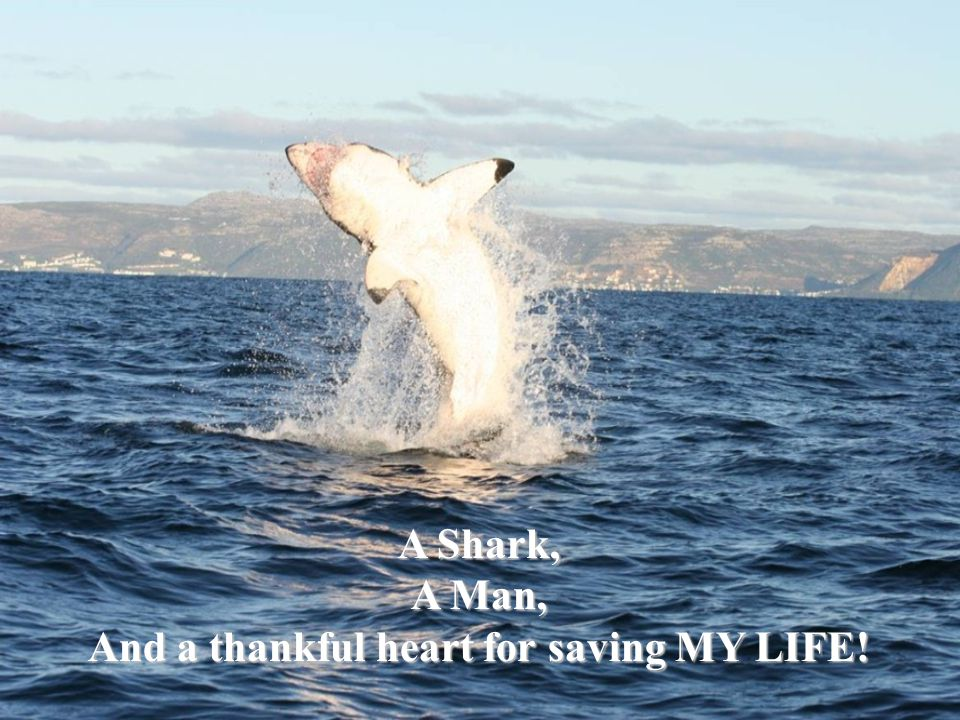 A Shark, A Man, And a thankful heart for saving MY LIFE!