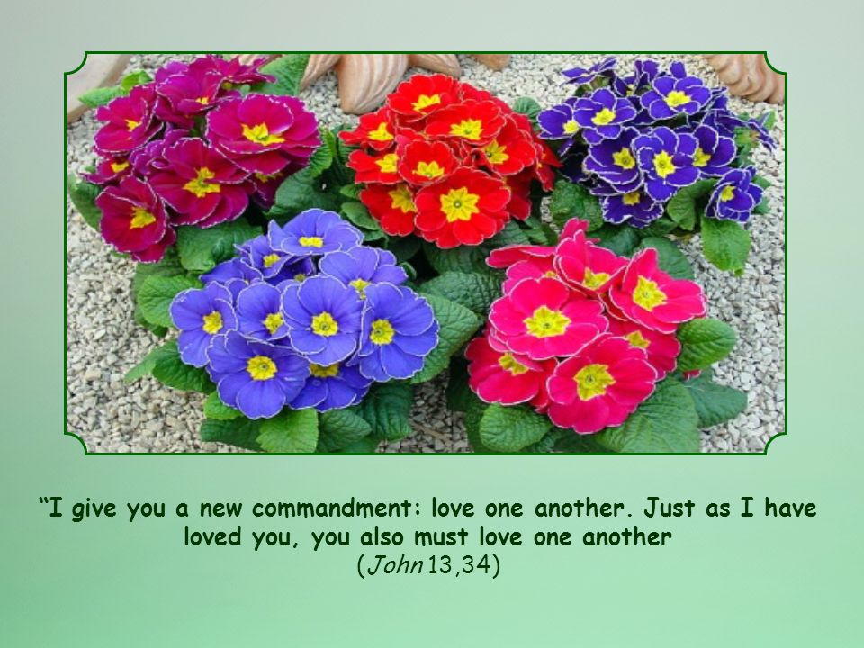 We should not simply take this as a norm or a rule to follow, or just another commandment.