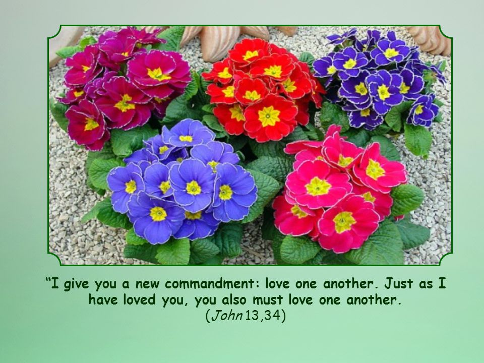 I give you a new commandment: love one another.