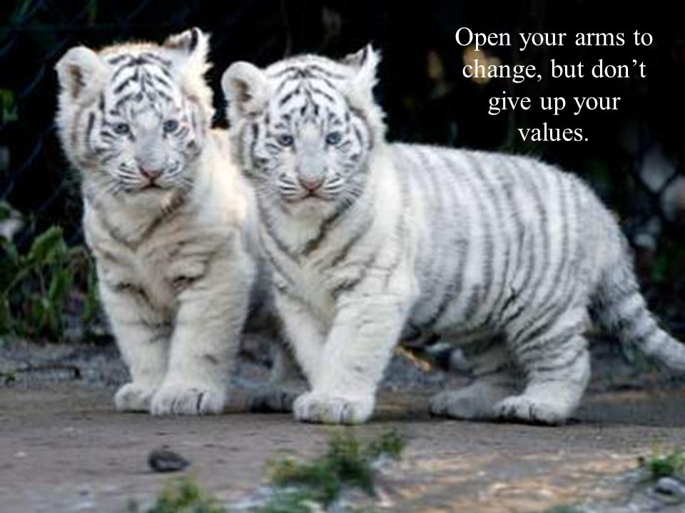 Open your arms to change, but dont give up your values.