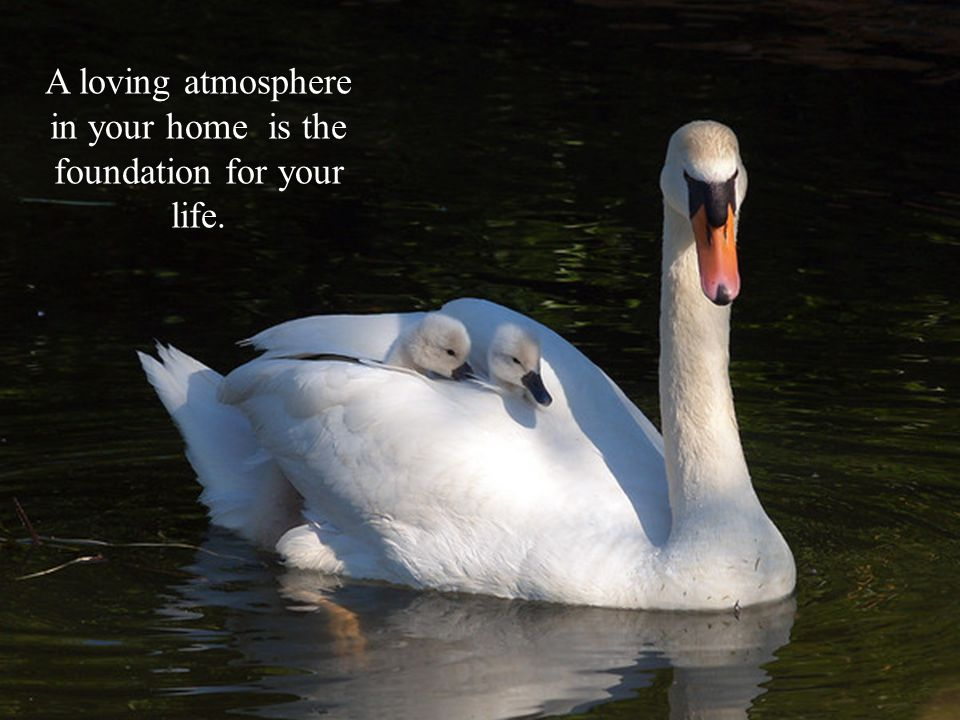 A loving atmosphere in your home is the foundation for your life.