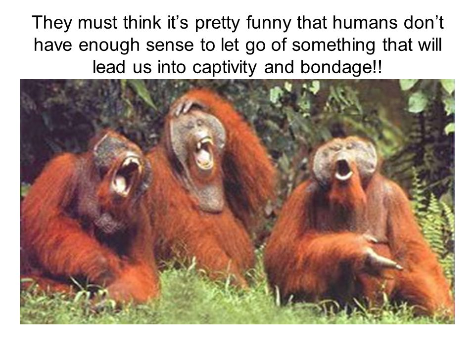 They must think its pretty funny that humans dont have enough sense to let go of something that will lead us into captivity and bondage!!