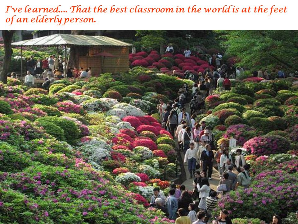 I ve learned.... That the best classroom in the world is at the feet of an elderly person.