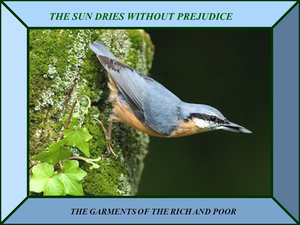 THE SUN DRIES WITHOUT PREJUDICE THE GARMENTS OF THE RICH AND POOR