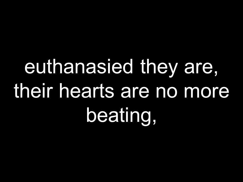 euthanasied they are, their hearts are no more beating,