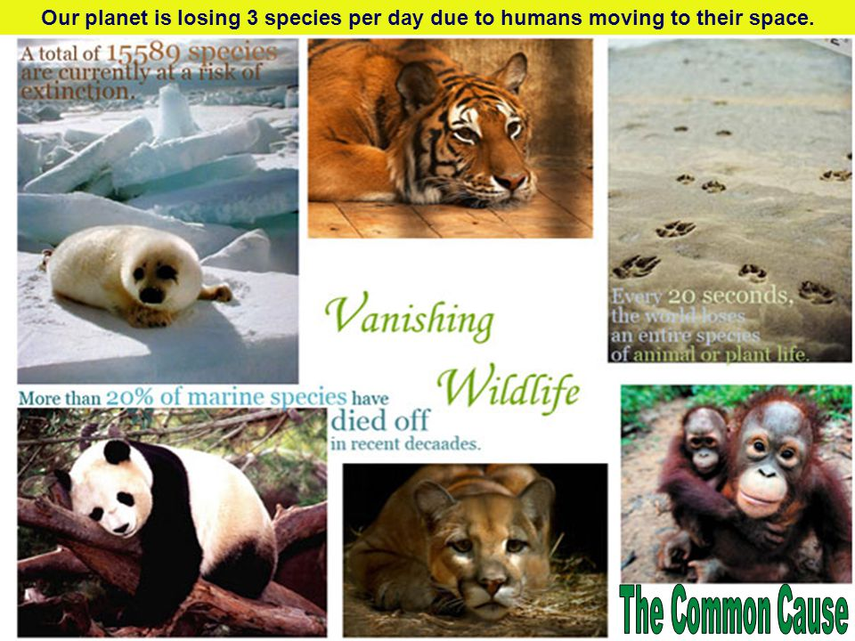 Our planet is losing 3 species per day due to humans moving to their space.