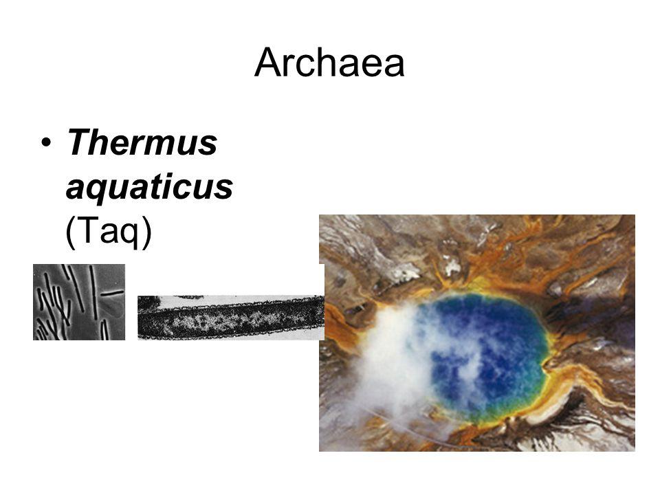 Archaea Thermus aquaticus (Taq)