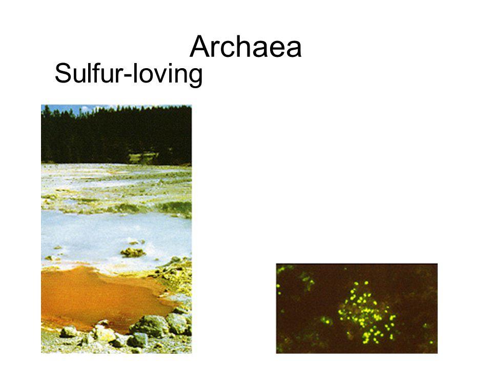 Archaea Sulfur-loving
