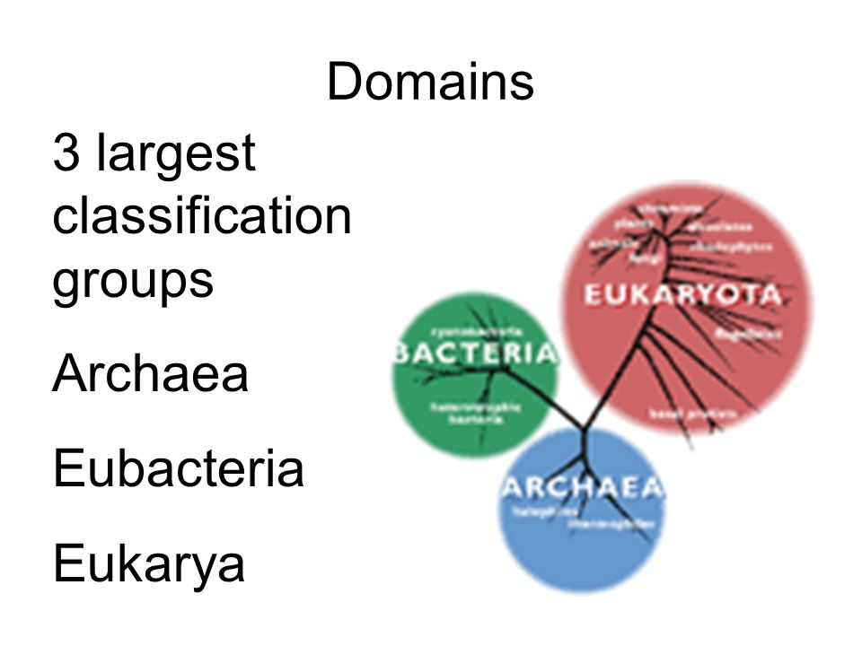Cladogram A diagram that shows the evolutionary relationships among a group of organisms