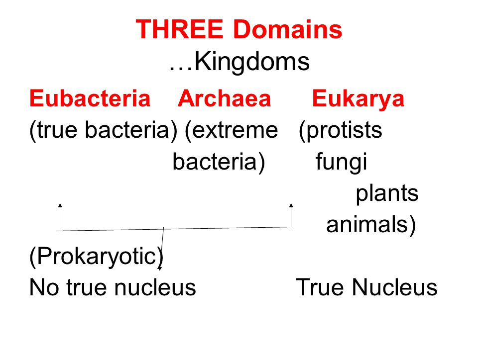 Kingdom: Animalia Eukaryotic No cell wall Multicellular Heterotrophic –need to get food from other sources (plants and animals)