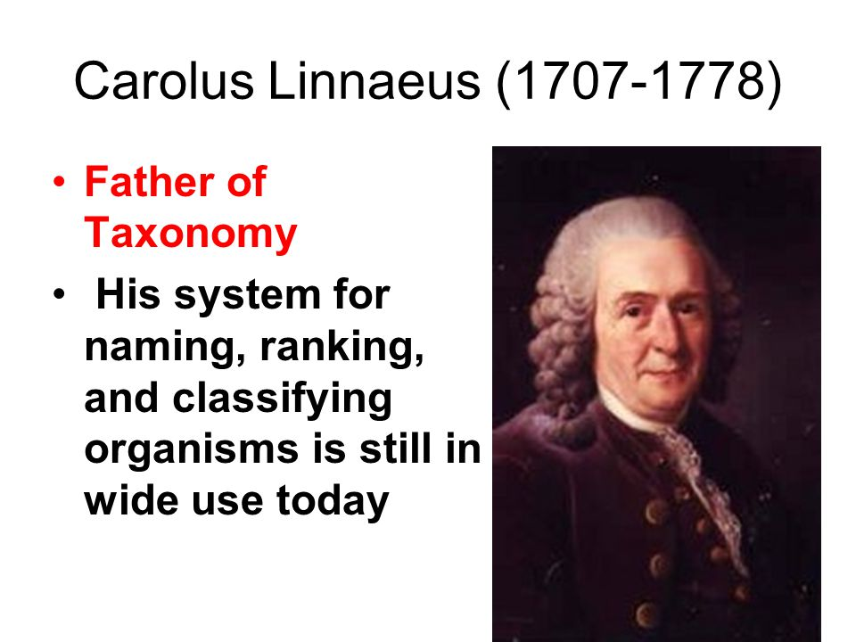 Carolus Linnaeus (1707-1778) Father of Taxonomy His system for naming, ranking, and classifying organisms is still in wide use today