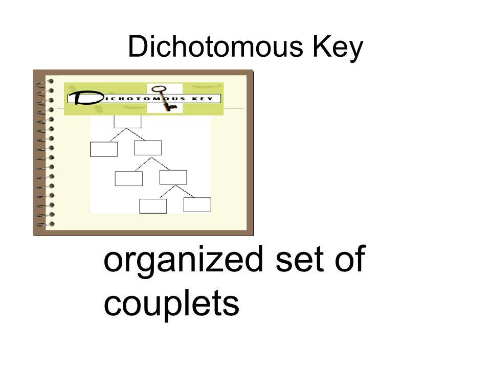 Dichotomous Key organized set of couplets