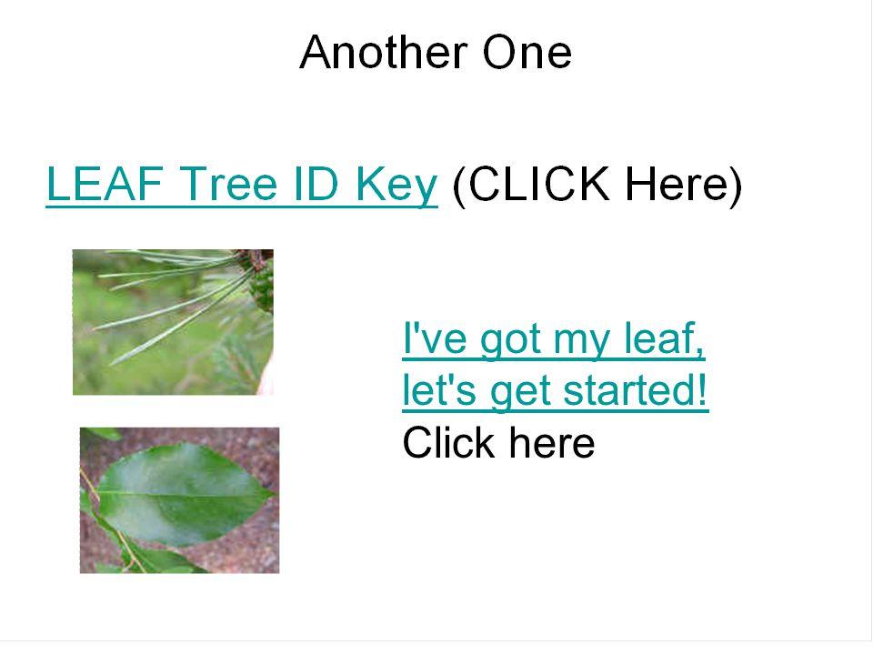 I've got my leaf, let's get started! I've got my leaf, let's get started! Click here