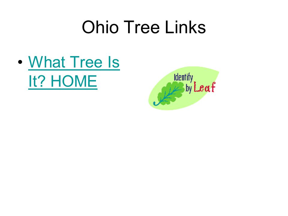 Ohio Tree Links What Tree Is It? HOMEWhat Tree Is It? HOME